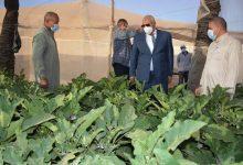 Photo of الزملوط يتفقد مشروع الصوب الزراعية بقرية المعصرة ويوجه بفتح منافذ بيع