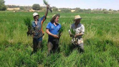 Photo of وزير الرى ردا على مطالبات النواب بإعفاء المزارعين من غرامات الأرز: طلعوا لى قانون