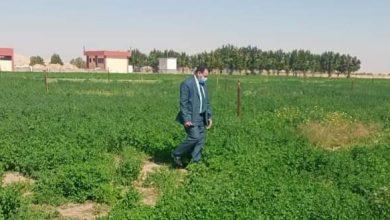 Photo of بالصور جولة ميدانية لرئيس جامعة الوادى الجديد لمنشأت ومزارع الجامعة بالكيلو 10