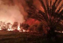 Photo of حريق كبير فى الراشدة وقوات الحماية المدنية تحاول السيطرة