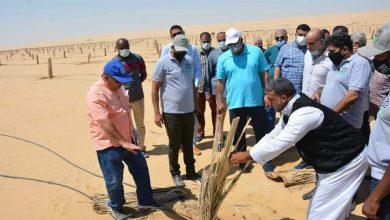 Photo of على مساحة ١٠٠٠ فدان الزملوط يتفقد مشروع وقف خيري لزراعة النخيل بالفرافرة