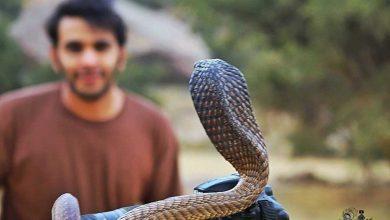 Photo of بالفيديو طريقة مبتكرة ومخيفة في صيد الثعابين الكبرى